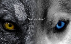 Photo - two-wolves