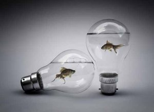 Photo - Light bulbs w: fish